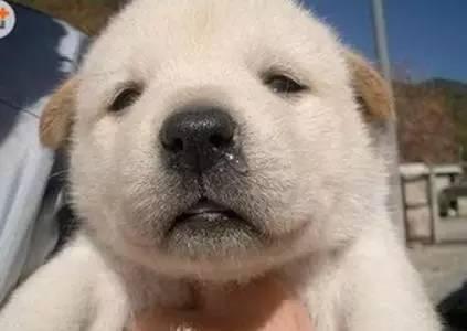 """狗狗名字叫body,却被硬生生喊成了""""包皮"""""""