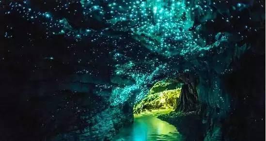 四川天台山景区是目前亚洲最大的萤火虫观赏基地,成千上万的萤火虫