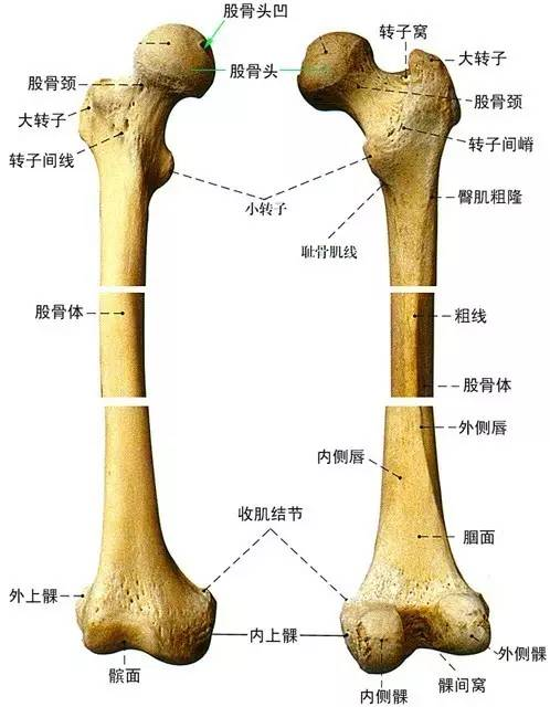 人生最后一次骨折 股骨颈骨折图片