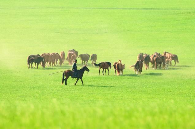 从集美出发丨中国最美9大草原,总有一个你想去的
