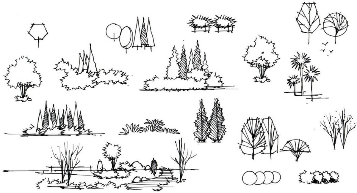 乔木手绘线稿图片大全