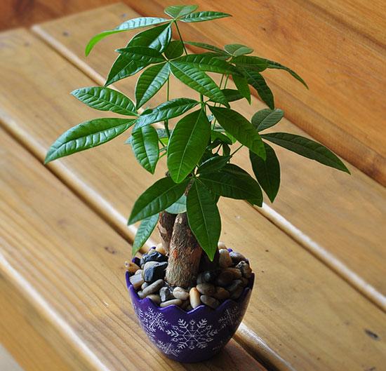 传统风水中,客厅的植物摆放有助于提升事业,并增加财运.