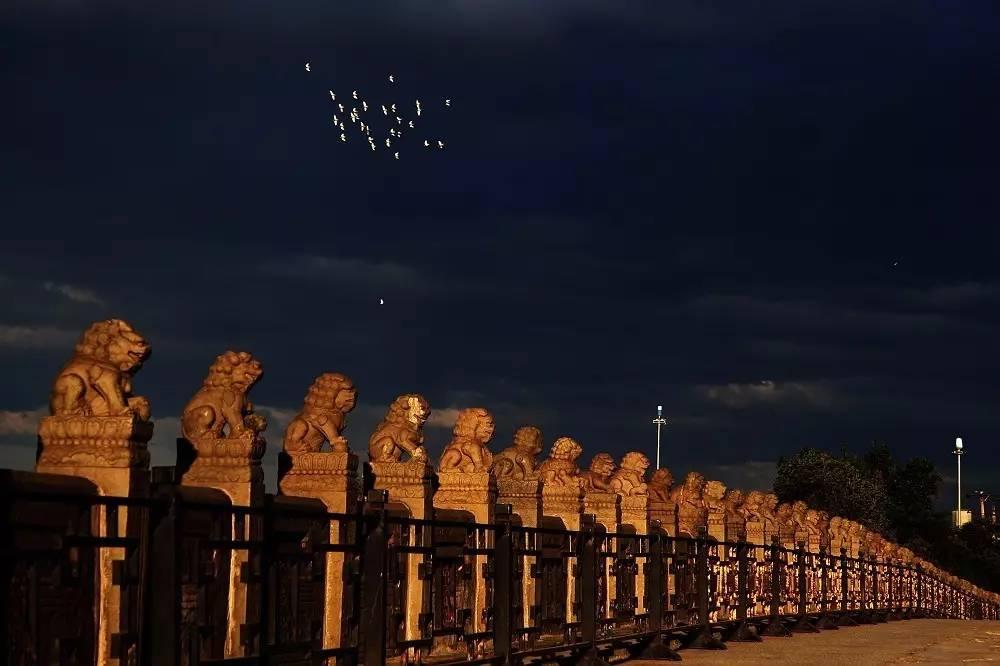卢沟桥的狮子能 数 清了