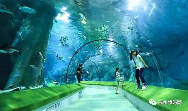 娃夜宿海洋馆,探秘深海奇幻,和海洋生物一同入眠