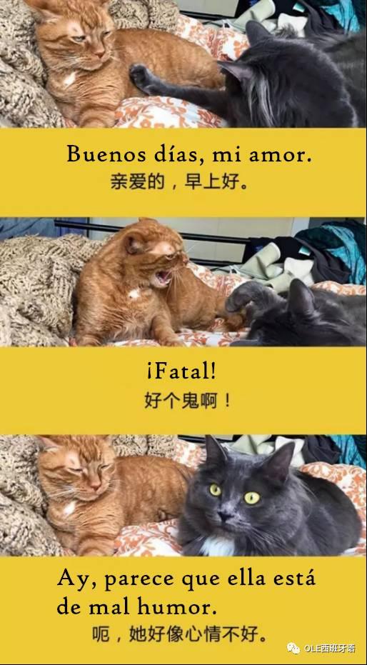 西班牙语喵语表情包+语言包