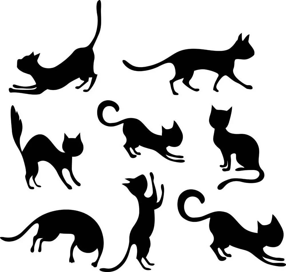 午间「猫式」瑜伽图片