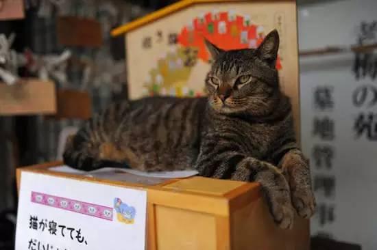 日本各地猫寺,瞬间被治愈