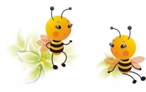 The bee s knees 是蜜蜂的膝盖吗
