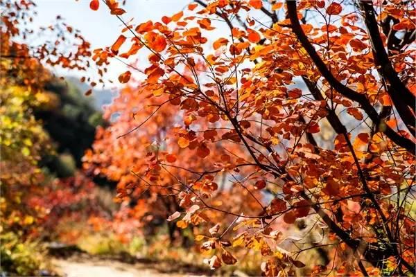 邯郸   河北响堂山国家级森林公园   园区主要景点响堂山石窟是全国七