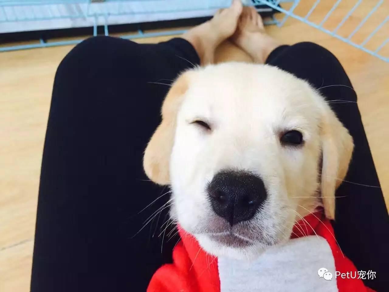 天天要和狗做爱_在宠物店上班就可以天天和狗玩?——\