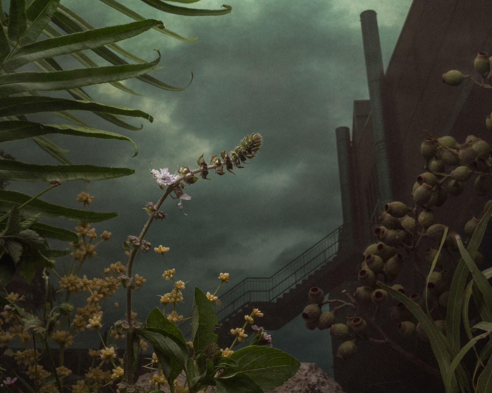 周末养眼 2017玛格南摄影奖美图大赏,有一位中国摄影师