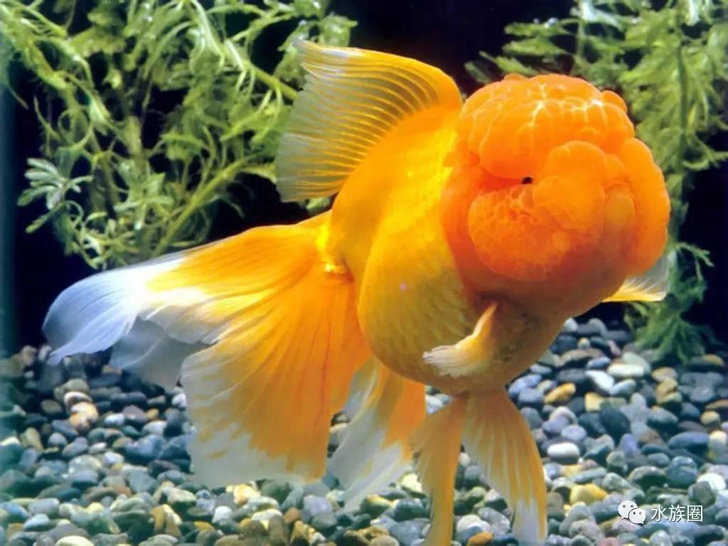 常见观赏鱼分类资料