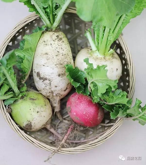 后,起垄   地方特色品种,上青下 是北方地区常见的水果萝卜.这个