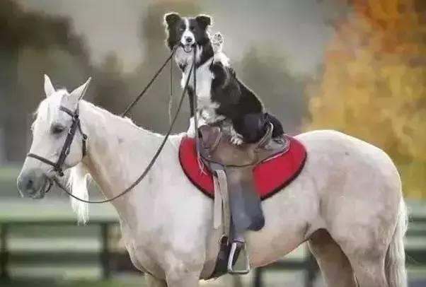 骑白马的除了唐僧,还有汪星人