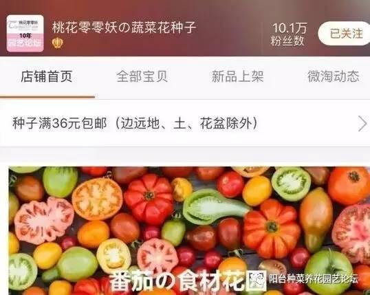 杨桃种子盆栽能结果吗图片