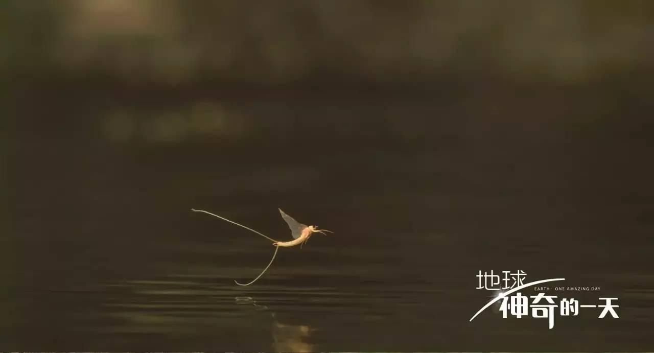 阅开心 邀你来参加自然纪录电影 地球 神奇的一天 首映礼