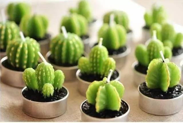一花一世界之墨西哥:世界上有2000多种仙人掌