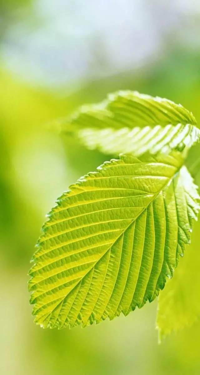 【绿色植物】高清护眼手机壁纸