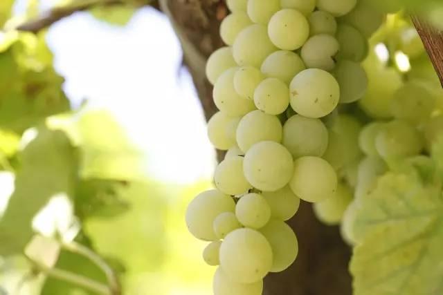 松桃美眉的福利来啦!!!给美眉们安利了一些好吃还瘦身的水果