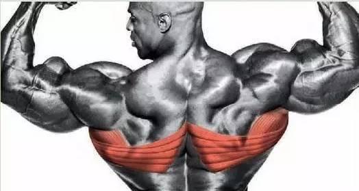背部的结构解剖图