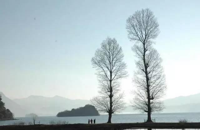 主播丹松和王玲为你读诗,回忆经典爱情诗 致橡树