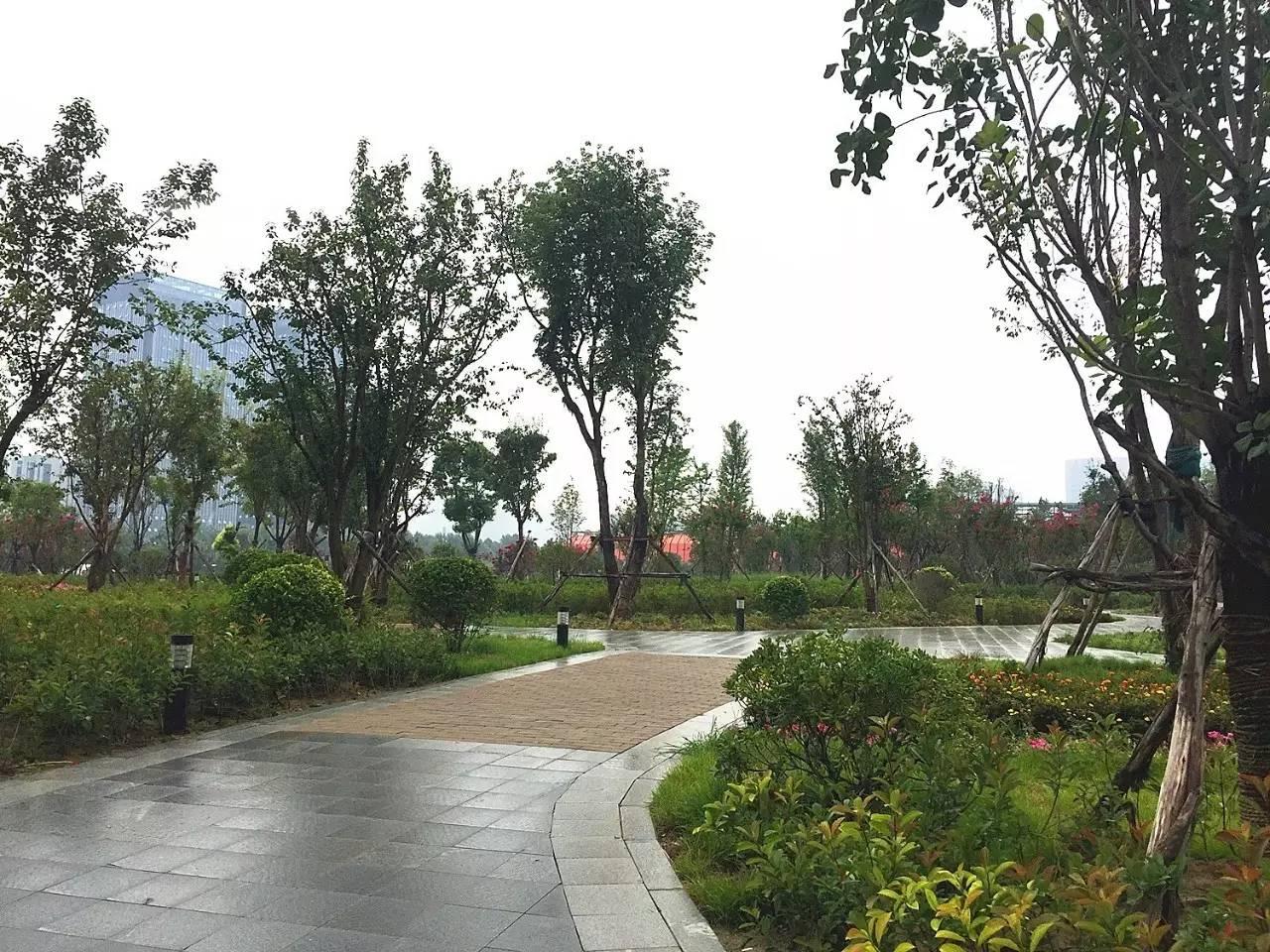 郑州大爷大妈公园图片