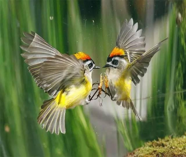 《鸟语小夜曲》《清晨马蜂》《indiansummer》清晨夜莺菜不能和什么同吃图片
