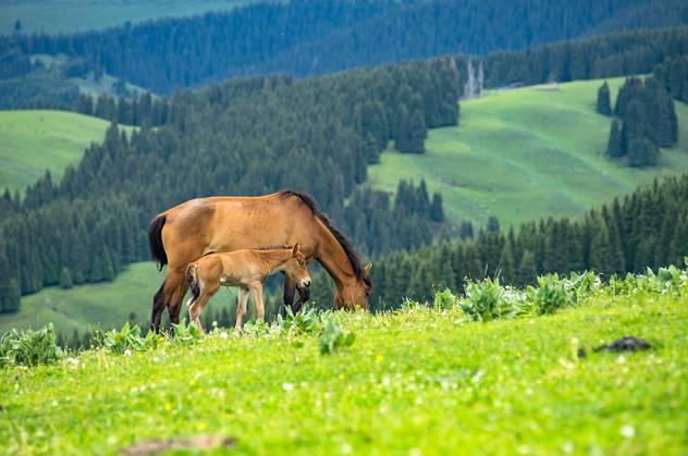 视界旅行 中国最美9大草原,总有一个你想去的