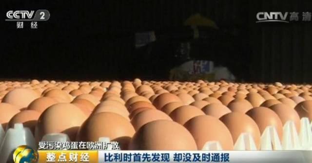 恐怖 鸡蛋/针对强大的压力,比利时农业大臣迪卡姆表示,他已经责成对此事...
