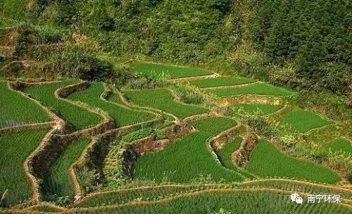 【環境監測】南寧市農用地土壤汙染狀況詳查點