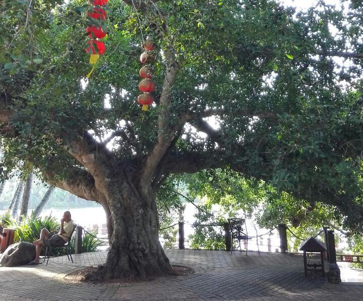 古村落、见血封喉、老榕树,你想不到的仙境!-遇见旅行