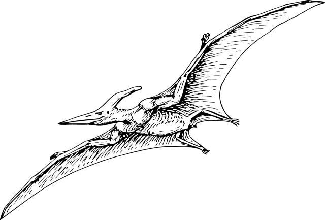 翼龙 风神翼龙 和 传说中的龙有什么不同