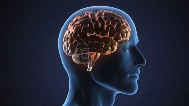 国家加强脑科学研究, 潜能开发重在教育应用