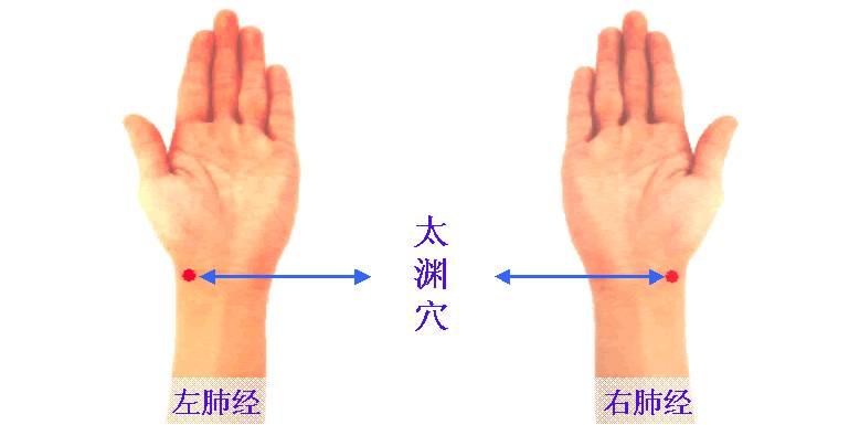 局部解剖:有桡动、静脉.分布着前臂外侧皮神经和桡神经浅支.   主
