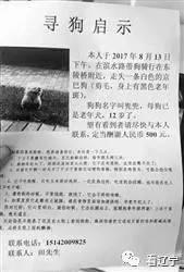 微信寻狗 舅舅悬赏一辆车 外甥兑现2000元