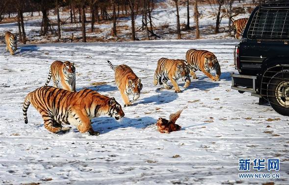 东北虎豹国家公园管理机构成立图片