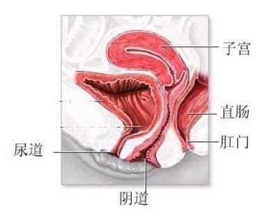 阴道炎的危害不可小视