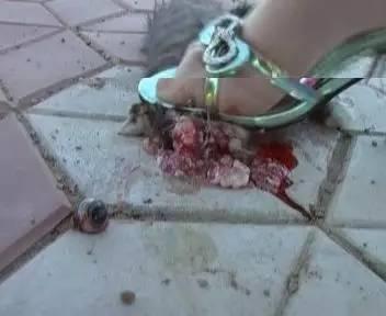 淫虐杀动物被杀的案件_虐杀动物者,你们的良心不会痛吗!