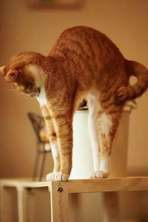 nentiyishuao_但依然执着爱猫的少年 weibo:-树小喵- | instagram:shuxiaomiao e
