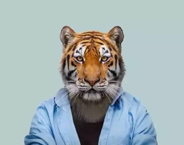 你是不是虎_pdp性格测试:你是老虎,孔雀,考拉,还是猫头鹰,变色龙?