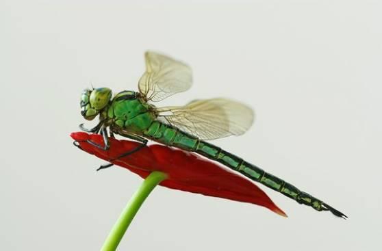 蜻蜓姬的大�_最容易搞定的\