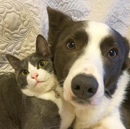 只見奔馳貓jerry和邊境牧羊犬rundy花色超相似,拍照時也常常做出同款