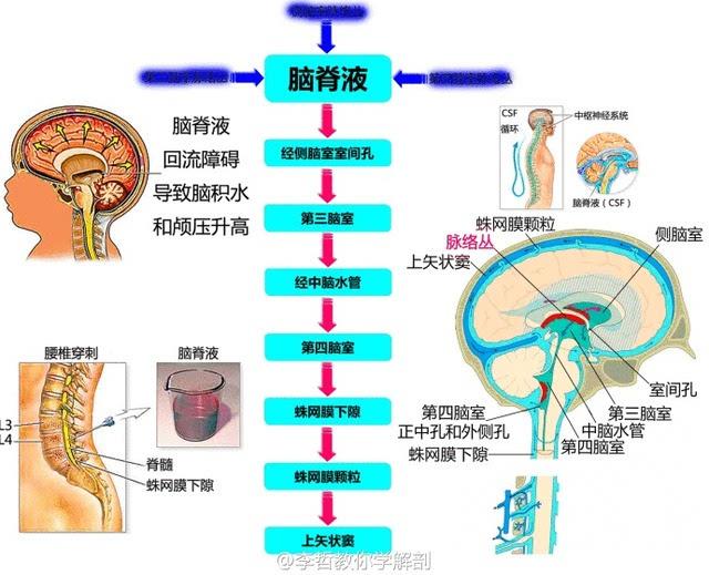 抽脑脊液疼吗_脑脊液循环