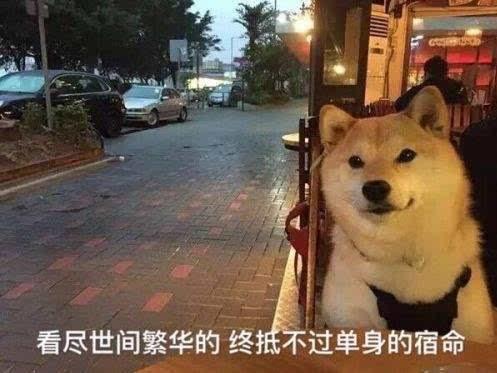 你是不是有别的狗了_还有这张为单身狗代言的经典图,瞧这溢出屏幕的淡淡的忧伤,你是不是也