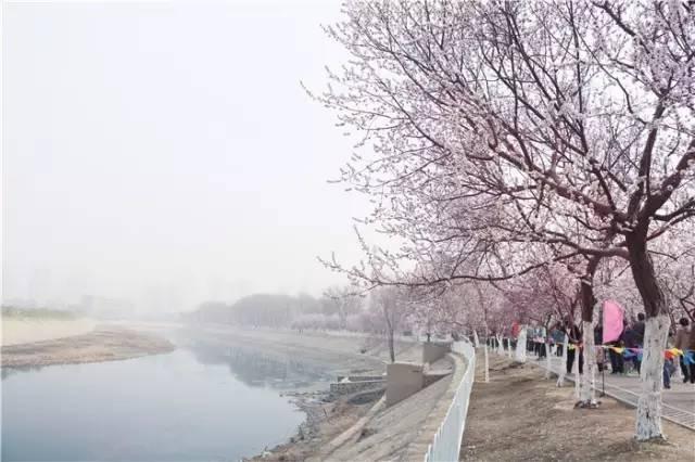 天津市桃花堤在哪_天津桃花堤的桃花盛开了!最全游玩指南在此!