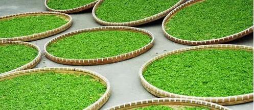 绿茶制作过程_中国绿茶的基本生产工艺流程