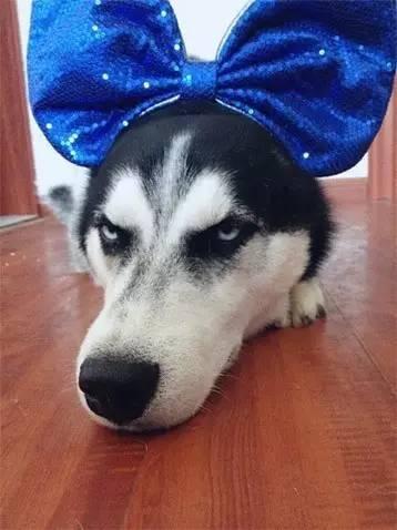 WWW_TUBEHOUND_COM_skyhoundz世界杯飞盘狗赛就是其中之一 飞盘狗两种主要赛式: 距离赛