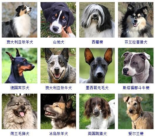 小型犬都有哪些品种_分享|178种狗狗品种大全,原来按体型智商都是这么分