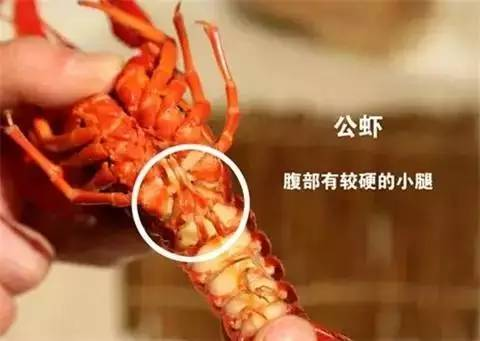 小龙虾真的不爱干净吗?大学教授做了这个,吃货们激动的泪崩了