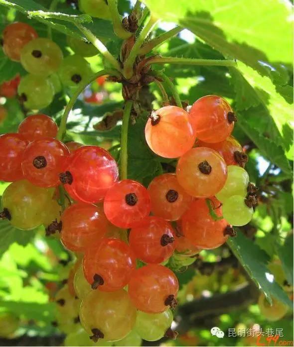 外国鸡品种_云南的24种奇葩水果,你都见过吗?能认出一半的,算本地人!